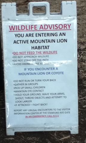 Umgang: Schreien wie ein Puma