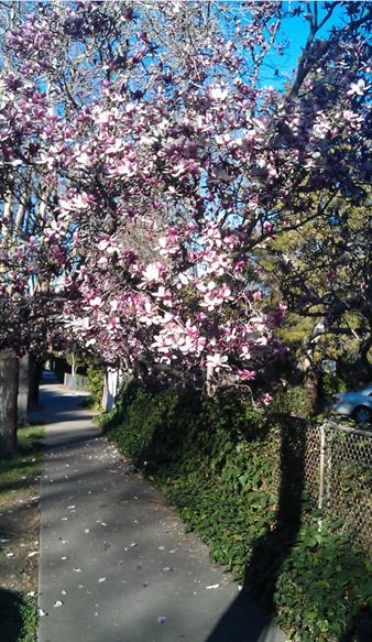 Frühling in Stanford