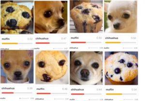 Input-Daten, die nur zufällig wie ein bestimmtes Muster aussehen. Hier am Beispiel eines Chihuahuas und eines Muffins (zum Vergrößern klicken)