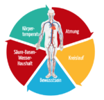 Übersicht über die vitalen Körperfunktionen